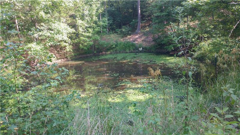 Pond Near the Home