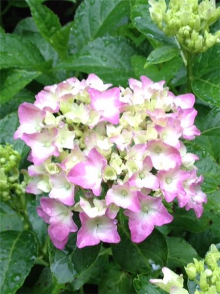 Many flowering flowers