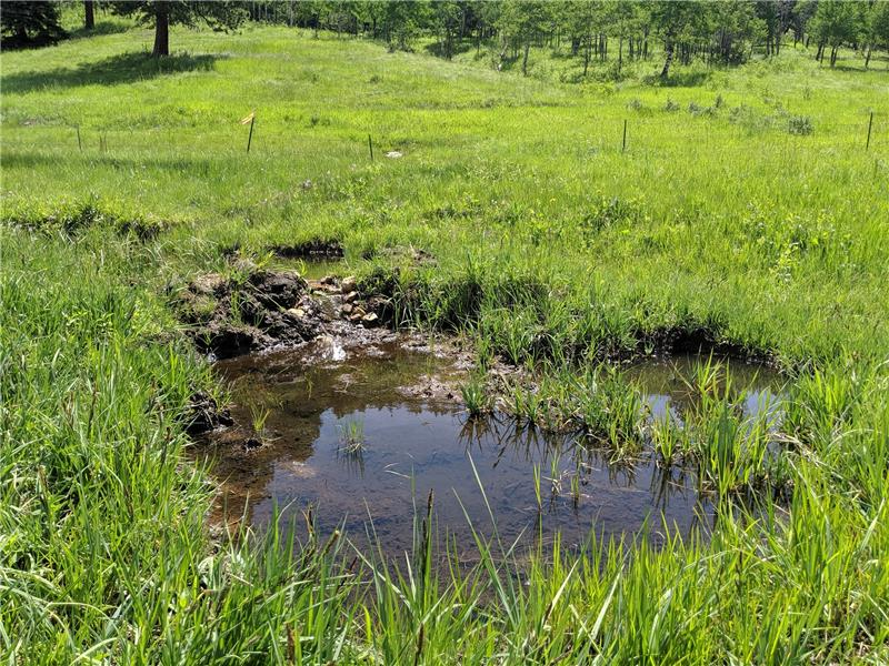 One of three small ponds from which horses could drink