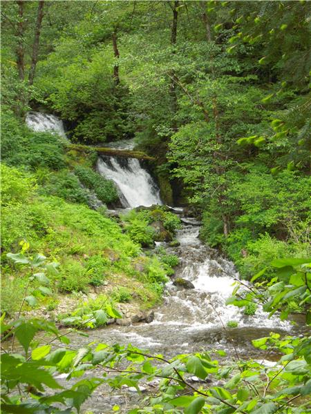 Waterfall Lush Spring