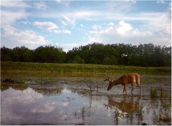 Bryson Lake Rd, Bryson, TX
