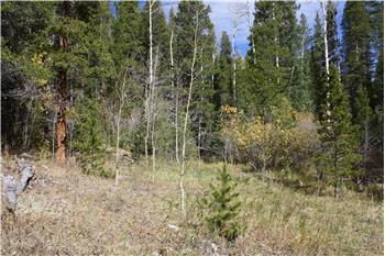 1567 Missouri Gulch Road Spacious Creek-Side Acreage, Black Hawk, CO