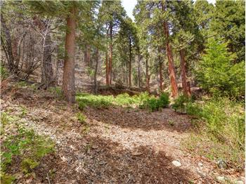 sky forest rental backpage