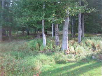 Lot 16 Fern Lane, Gouldsboro, PA