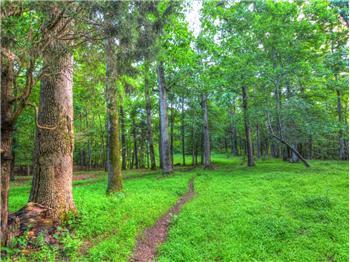 TBD Paddock Wood Road, Gordonsville, VA, VA
