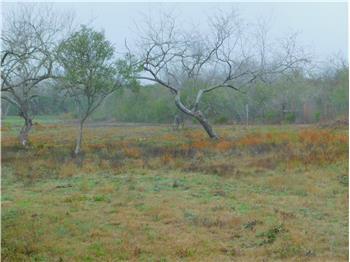 orange grove rental backpage