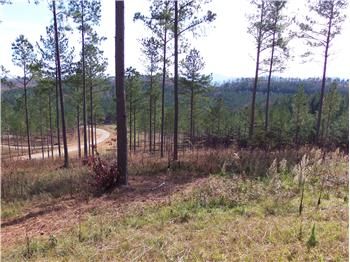 Lot 127 The Stables at 1300, Blairsville, GA