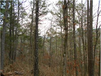 28 Acres - LeFlore County, Octavia, OK