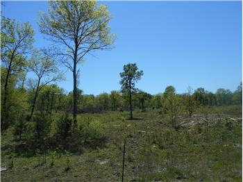 20 Acre Tract For Sale in the Millerton/Garvin Area, Garvin, OK