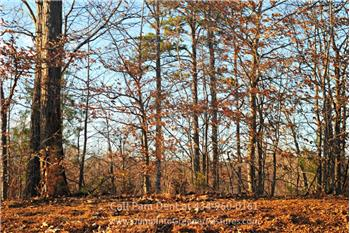 Forest Ct Lot 16, Louisa, VA