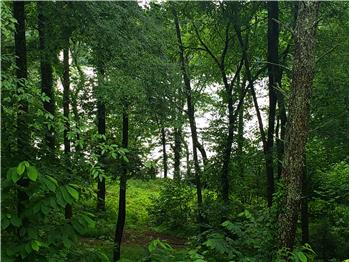 Lot 11 Walnut Bend Drive, Whitesburg, TN